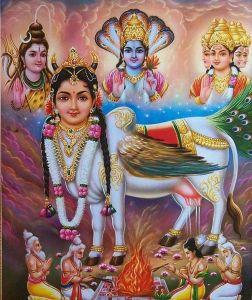 Sri Surabhi devi Stotram