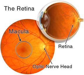 Image result for retina of the eye