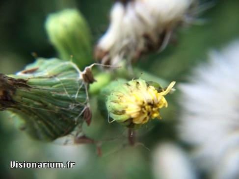Une fleur fanée bien moche.