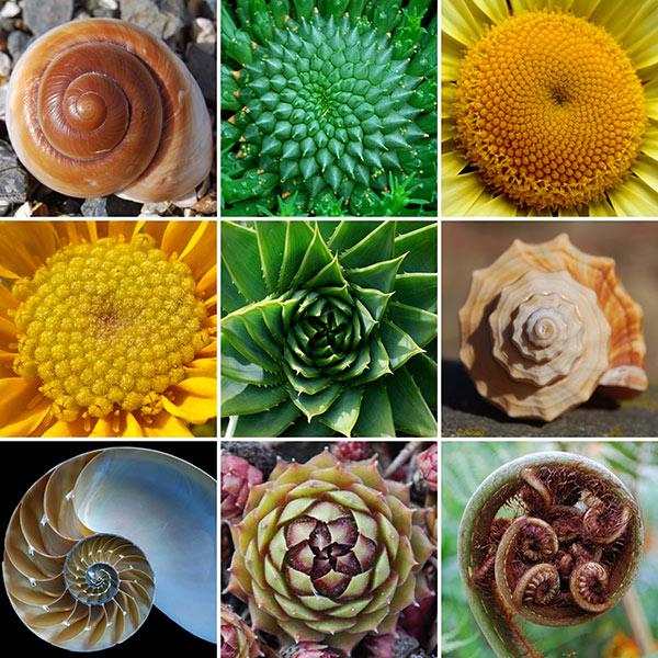 fibonacci reihe- goldener schnitt