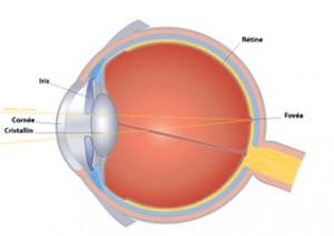 Les défauts de la vision oeil normal