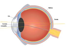 Les défauts de la vision presbytie