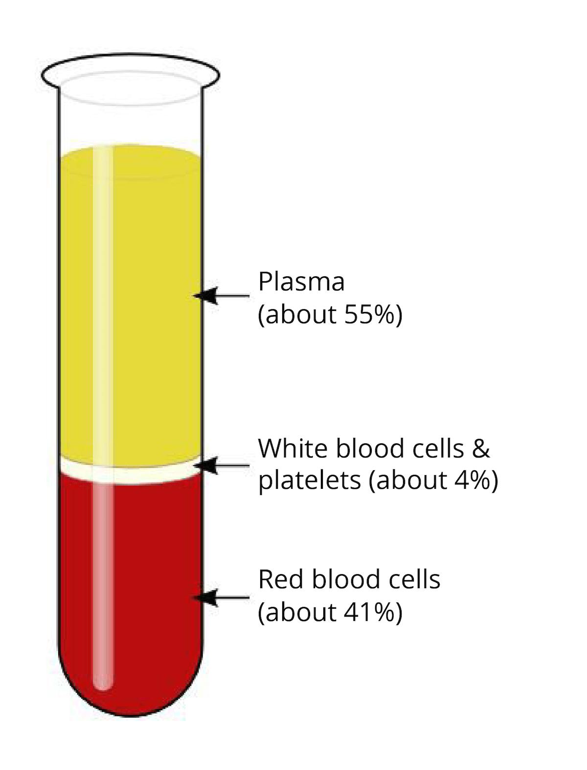 Chemical Makeup Of Blood Plasma