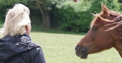 Octobre 2019 : Le cheval, guérisseur de l'Homme ou pas ?