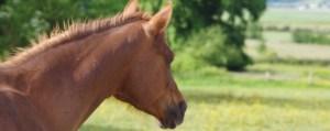 Equicoaching: Pourquoi le cheval