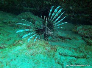 Nurse Shark Reef Lion Fish