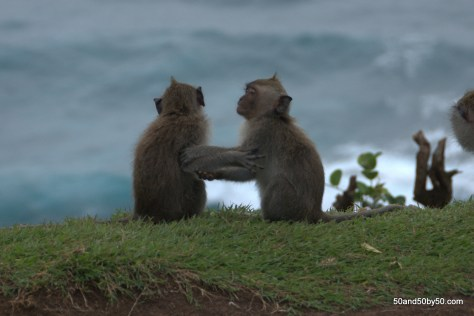 A couple of monkeys (macaques) at Ulu Watu, Bali, Indonesia