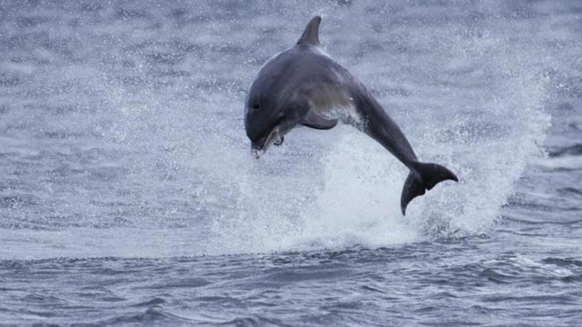 Rspb Dolphin Watch In Aberdeen
