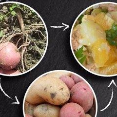 Cocina de mercado, variedades de patatas en Coín