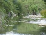 Caudal de Rio Grande