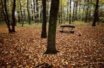 outono-04