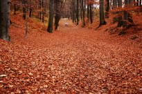 outono-06