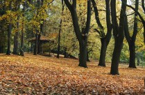 outono-14