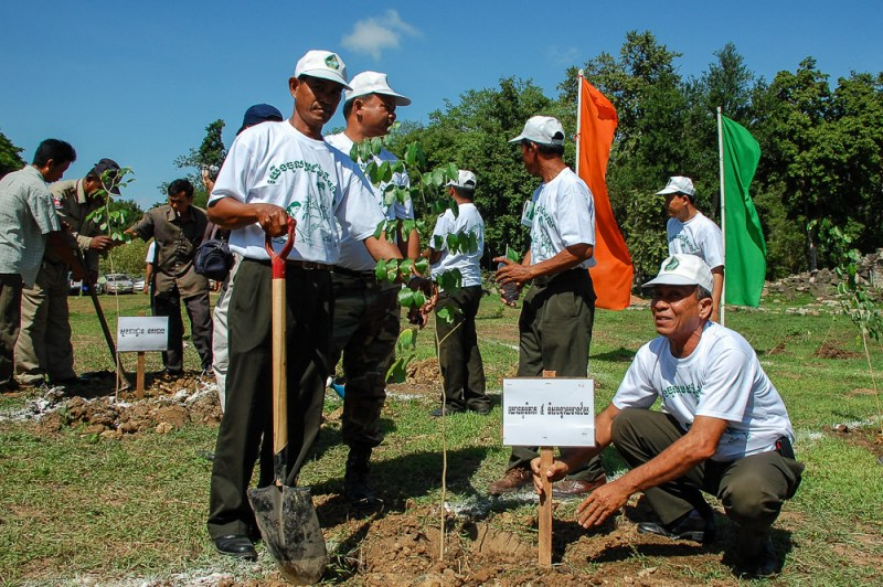 Tree planting in the temple