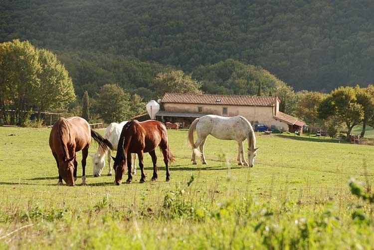 il-cornacchino-equitazione-castellazzara