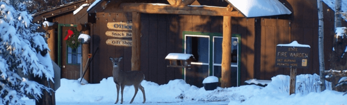 Deer in snow outside Gunflint Pines Resort and Campground