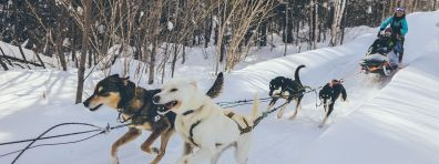 Gunflint Lodge Dog Sledding