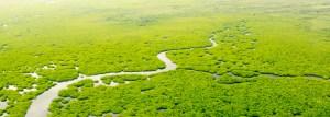 Mangroves Aerial View