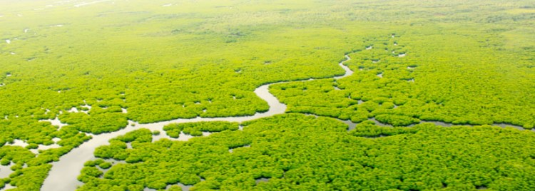 Mangroves Aerial View