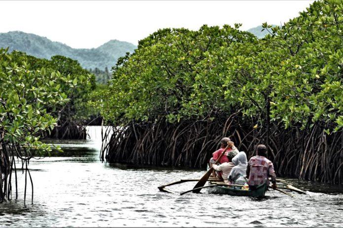 Del Carmens Mangrove Forest By Erwin Mascariñas 2 696x464 1