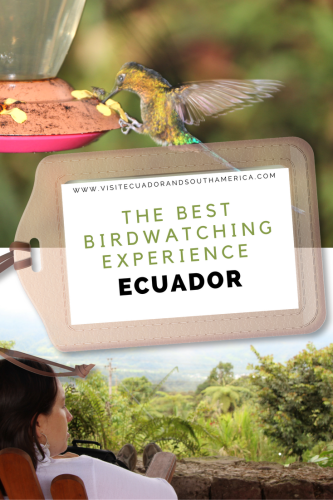 the-best-birdwatching-experience-in-ecuador-photo-tour