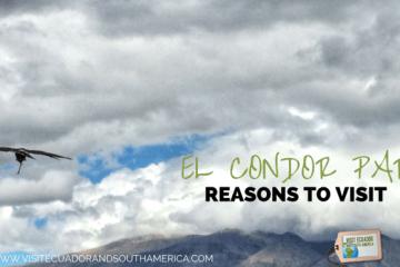 reasons-to-visit-parque-condor-in-ecuador
