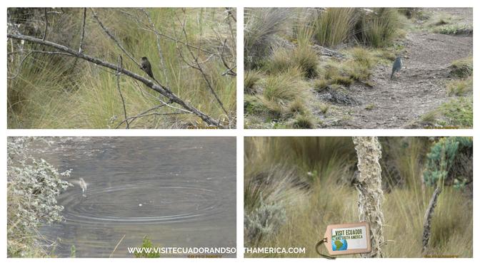 Cajas National Park BIRDWATCHING