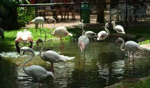 Passeio no Parque das Aves, em Foz do Iguaçu
