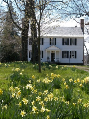 front and daffodils 2