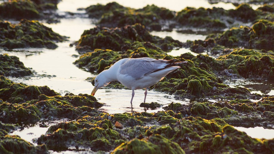 Texel Wadden Island things to do | Frisian Islands visiting Netherlands