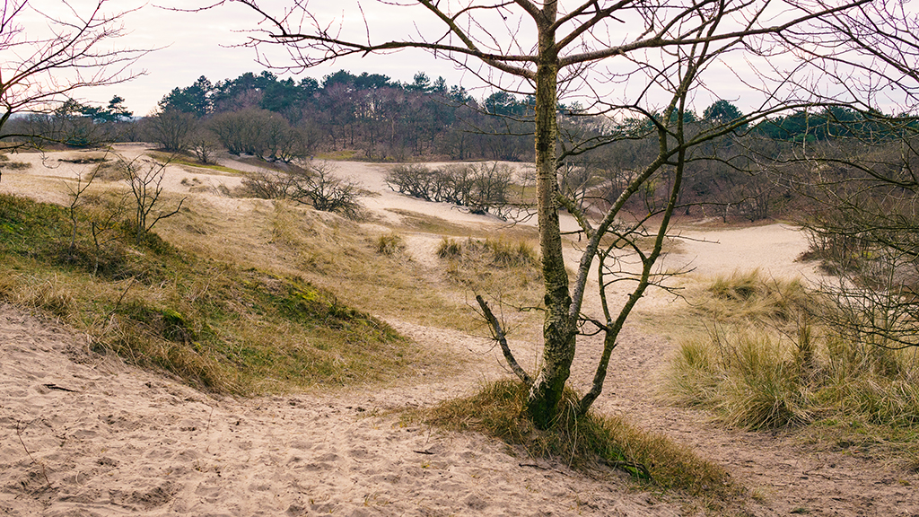 Visiting the dunes of Schoorl | Cycling in the dunes of Schoorl | Walking in the dunes of Schoorl || Best nature reserves of The Netherlands | Places to visit in Noord-Holland