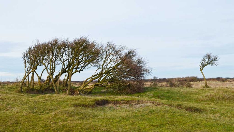 The island of schiermonnikoog and its national park. Here you can see typical dutch trees in the middle of grassland and dunes