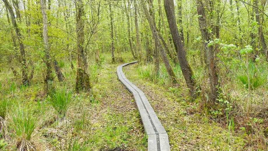 Oldest nature reserve of The Netherlands: Naardermeer. Here you see a walking path made of wood in the middle of blooming trees and grass