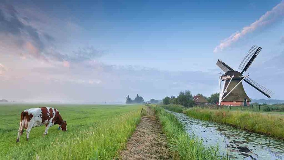 A traditional Dutch landscape: cows grazing in the meadows, a small river and a windmill next to the river at sunrise