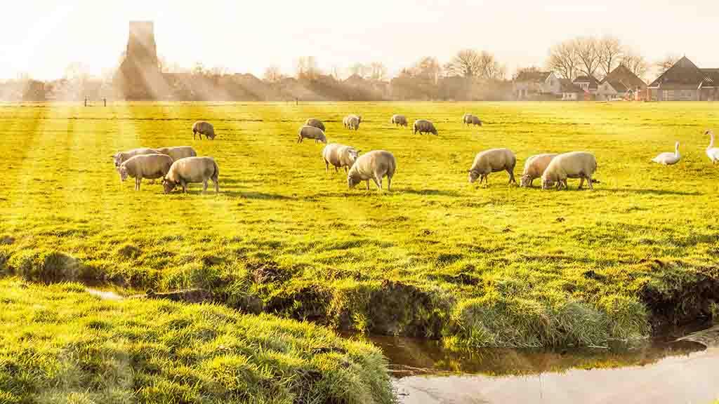 Rural landscape in Holland