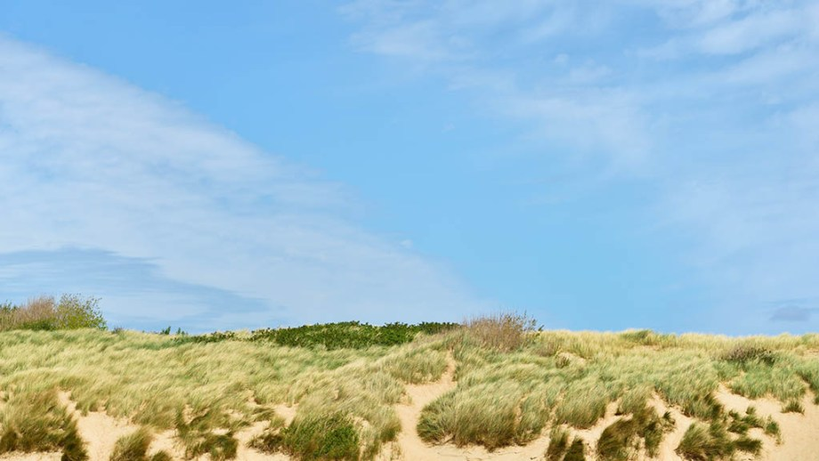 Dunes at the North sea shore in the Netherlands