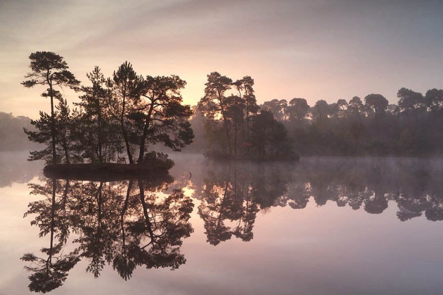 gold sunrise over wild forest lake, Oisterwijk, Netherlands