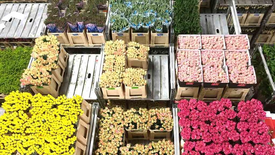 View on top of flowers in bunches in the worlds largest flower auction in Aalsmeer, The Netherlands