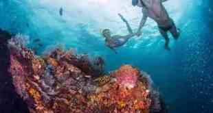 paket-snorkeling-karimunjawa