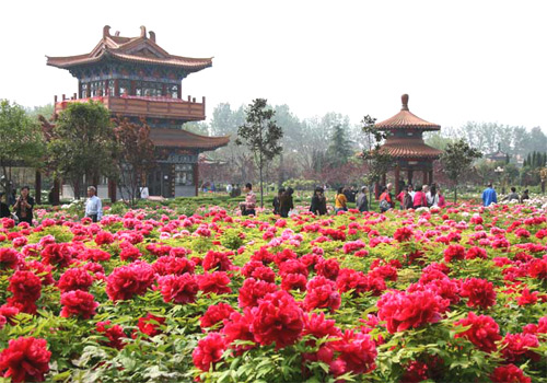 China National Flower Park in Luoyang Old Town District of Luoyang in Henan Province
