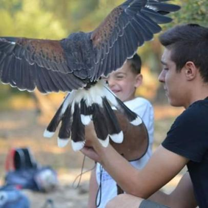 Falcon's experience