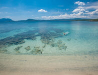 Pelican Pellicano_Beach