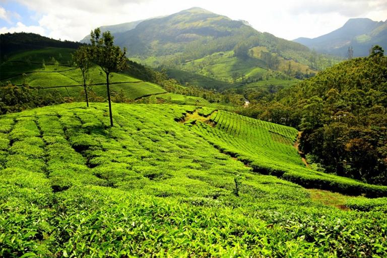 Munnar honeymoon destination in South India