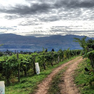 Signature Experiences | Westside Wine Trail | West Kelowna