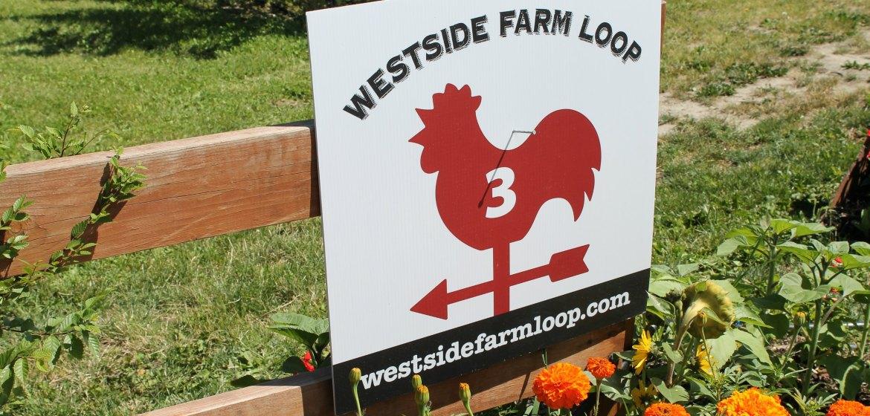 Westside Farm Loop Rooster