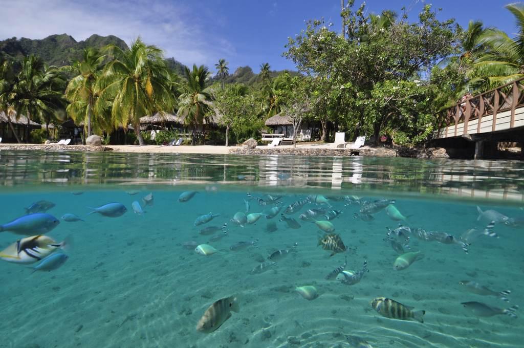 Italy And Maldives Honeymoon