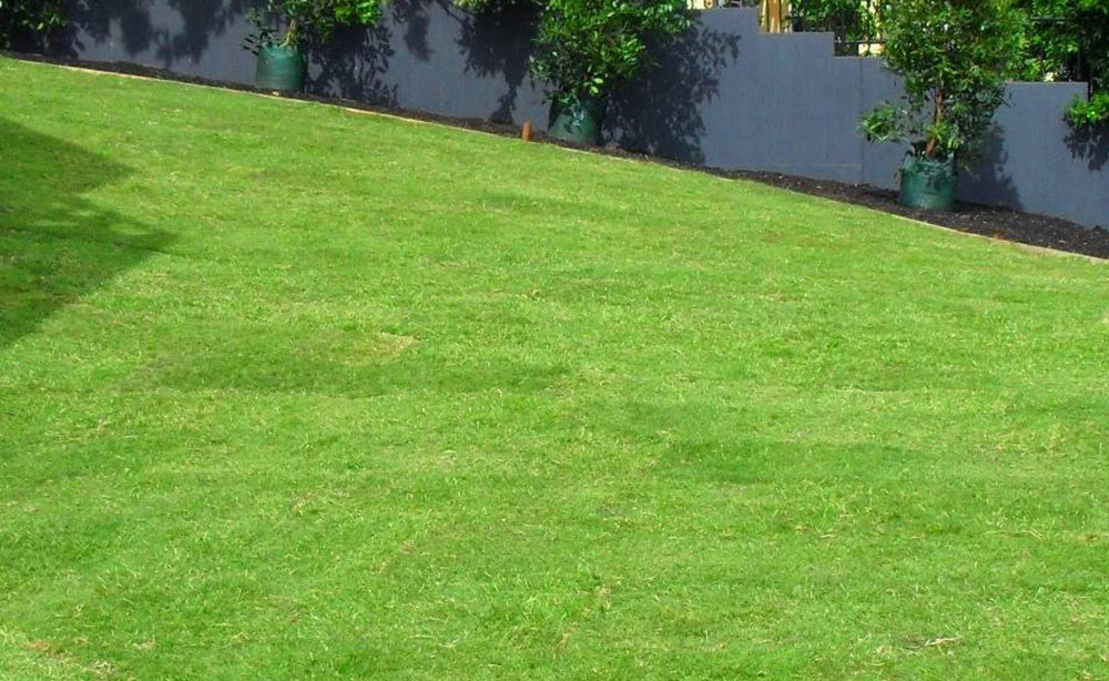 Windsor Green Adelaide | Lawn
