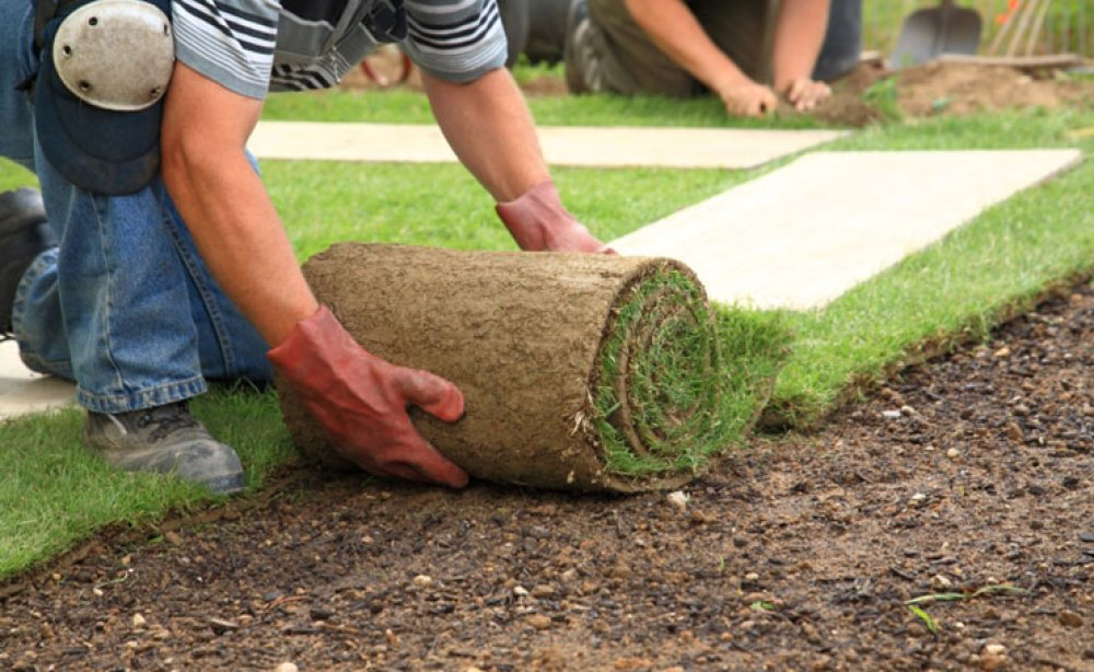 Roll Out Lawn | Instant Lawn Adelaide | Visual Landscape Gardening