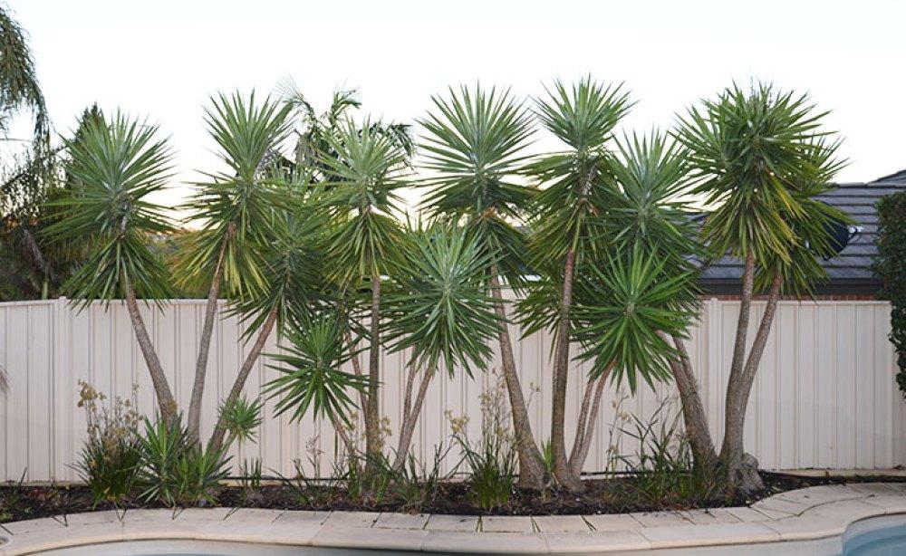 Landscaping Adelaide Back Garden Before