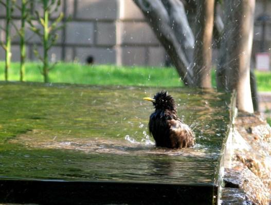 having a bath, D.C.